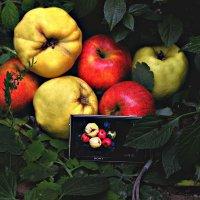 фрукты &  SONY :: Ханпаша Джаватханов