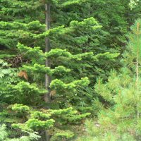 красоты Сибирского леса :: Нина Мохонько