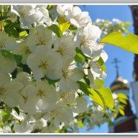Весна пришла, весне дорогу... :: ТАТЬЯНА Лыжина