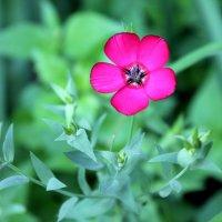 Аленький цветочек :: Элина Величко