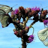 ...столовая для бабочек!... :))) :: Ира Егорова :)))
