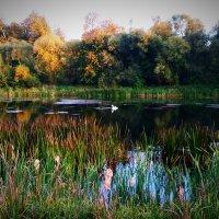 Плавуйщей лебедь :: KirillStoyanov
