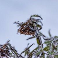Зимние цветы :: Cissa Andebo
