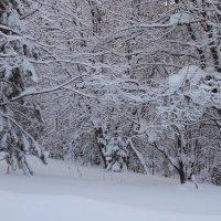 Графика зимы. :: Вера Литвинова