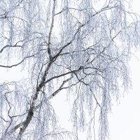 Светлая фотография - зимнее дерево :: Cissa Andebo