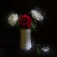 розы в белом :: Евгений Кирюхин