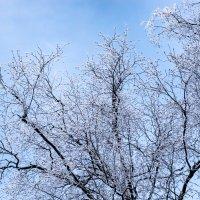 Дерево зимой :: Cissa Andebo