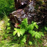 Однажды июньским днем в лесу... :: Лидия Бараблина