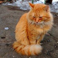 про рыжих котов 2 :: Александр Прокудин