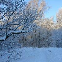 Все деревья в серебре :: Larisa Simonenkova