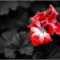 Аленький цветочек :: kvstu