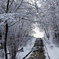 Лестница в городском парке :: Милешкин Владимир Алексеевич