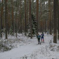 Лыжная гонка :: Сергей Цветков