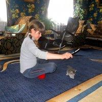 Два котёнка. :: Восковых Анна Васильевна