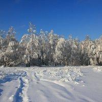 Заснежённый лес. :: Victor Klyuchev