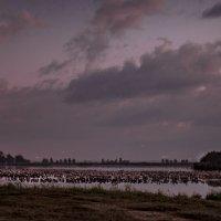 Ночь на озере Хула :: Адик Гольдфарб