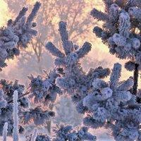 Цветные сны Зимы :: Екатерина Торганская