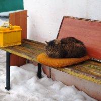 На скамейке. :: Ильсияр Шакирова