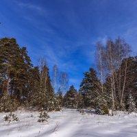 зима весной :: Василий Иваненко