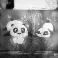 Ой, смотри какие панды милые :: Francise Cake