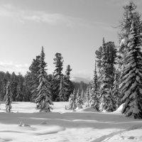 Зимняя сказка леса :: Любовь Иванова