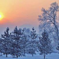 Яркое зимнее солнце :: Екатерина Торганская