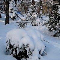Елочка в снежном кринолине... :: Лидия Бараблина