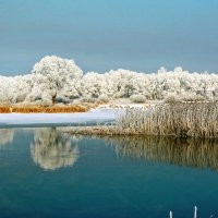 Белое отражение. :: Евгений Кузнецов