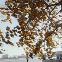 ветер :: Grigory Spivak