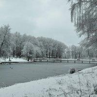 Зимний парк :: Милешкин Владимир Алексеевич