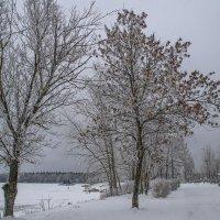 Вдоль озера :: Сергей Цветков
