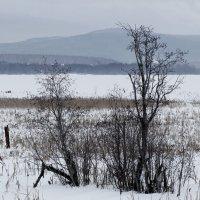 Зимний этюд :: Зинаида Каширина