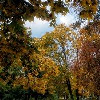 Осень :: Роман Савоцкий