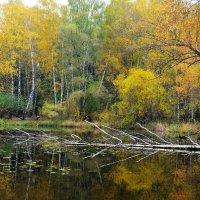 Осень в Серебряном бору... :: Наташа *****