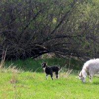 Весной в селе. :: оля san-alondra