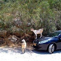 Пока хозяин машины на прогулке :: Герович Лилия