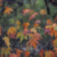 Мелодия дождя :: Гала