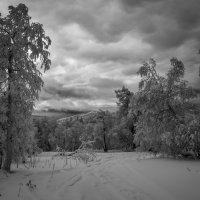 В зимнем лесу. :: Владимир Батурин