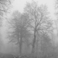 Деревья и туман :: Heinz Thorns