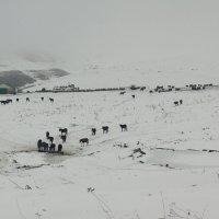 Лошади с нехоженых троп :: M Marikfoto