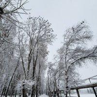 зима в районе... :: Батик Табуев