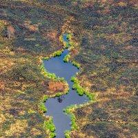 Берегите лес! :: Игорь В. Капустин