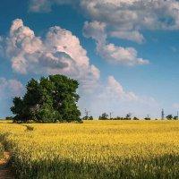 Тропинка в поле :: Евгений Кирюхин