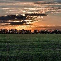 Закат в поле :: Евгений Кирюхин