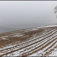 Снег и туман :: Александр Тарноградский