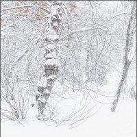 Белая зима :: Александр Тарноградский