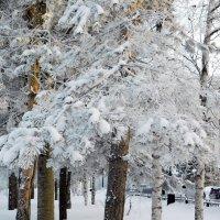 В снежно-инейной шубке :: Наталья Пендюк Пендюк