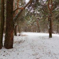 Малоснежный зимний пейзаж :: Александр Синдерёв