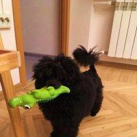 Дарси с любимой игрушкой :: Татьяна Р