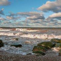 Море волнуется раз... :: Marina Pavlova